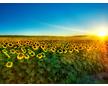 SUN*FLOWER
