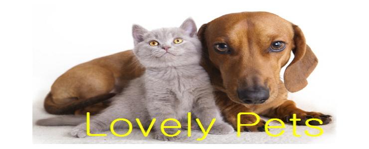 Lovely Pets Sale