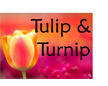 Tulip & Turnip