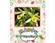 Happy Vanilla