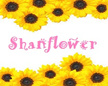 Shanflower