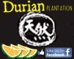 Durian Plantation