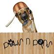 Paws N Pans
